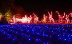 亀岡でイルミネーション企画「夢ナリエ」がスタート